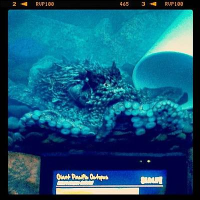 Octopus Photograph - #octopus #aquarium #instadroid by Kel Hill