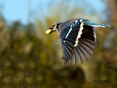 Photograph - Off To The Nest by Don Durfee