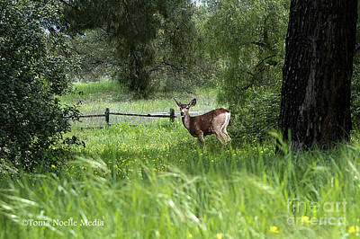 Photograph - Oh Deer by Tonia Noelle
