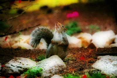 Autumn Peggy Franz Photograph - Oh I Ate To Many  Nuts by Peggy Franz