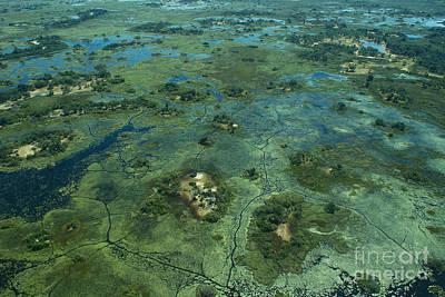 Photograph - Okavango Delta 4 by Mareko Marciniak