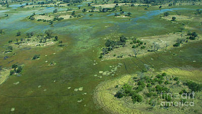 Photograph - Okavango Delta Islands 2 by Mareko Marciniak