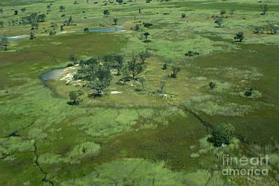 Photograph - Okavango Delta Islands by Mareko Marciniak