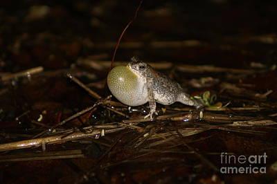 Photograph - Okavango Mini Toad by Mareko Marciniak