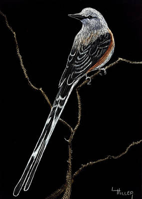 Etching Mixed Media - Oklahoma State Bird by Linda Hiller