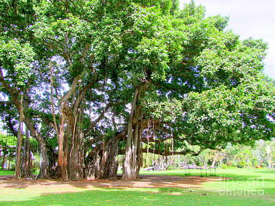 Vintage Signs - Old Banyan Tree by Mary Deal