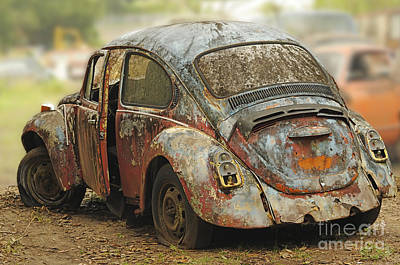 Photograph - Old Beetle by Nancy Greenland