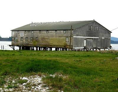 Photograph - Old Cannery Oysterville by Kelly Manning