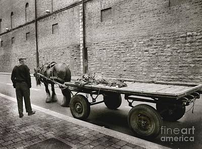Photograph - Old Clydesdale Dublin by Louise Fahy