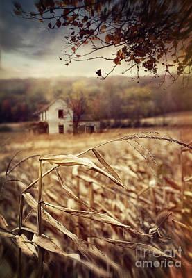 Photograph - Old Farmhouse In Autumn Corn Fields by Sandra Cunningham