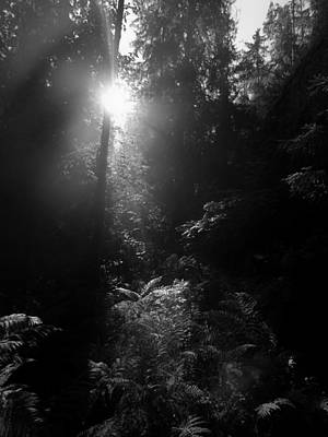 Jouko Lehto Royalty-Free and Rights-Managed Images - Old forests at EVO in bw by Jouko Lehto