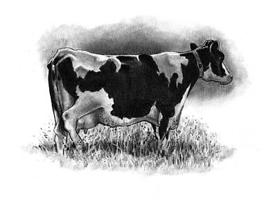 Dairy Cow Drawings