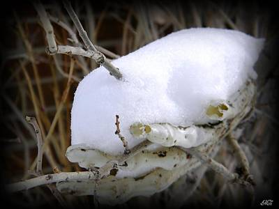 Art Print featuring the photograph Old Man Winter's Hand by Michelle Frizzell-Thompson