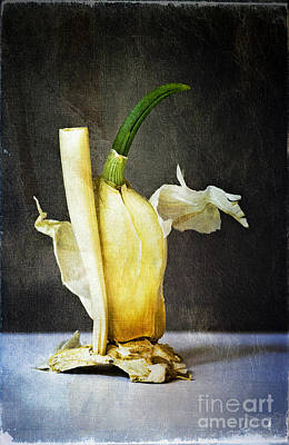Garlic Digital Art - Old Master by David Lade