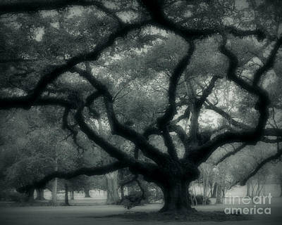 Old Oak Art Print