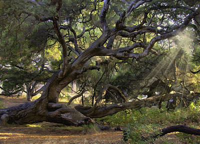 Digital Art - Old Oak by Sharon Foster