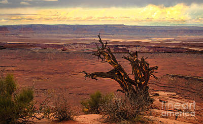 Photograph - Old One by Robert Bales