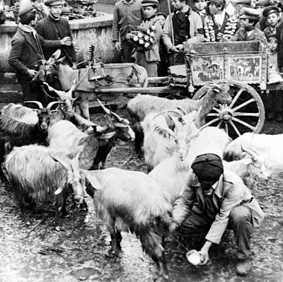 Crowd Scene Photograph - Old Palermo Sicily - Goats Being Milked At A Market by International  Images