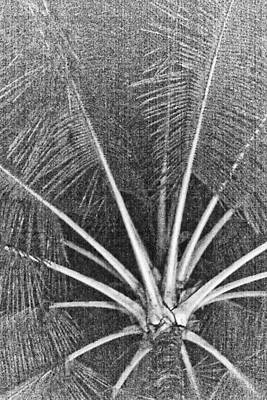 Photograph - Old Palm Tree by Lannie Boesiger