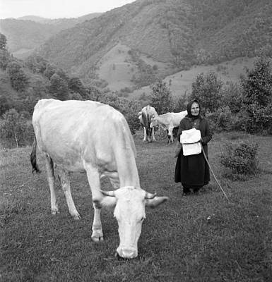 Photograph - Old Peasant Tending Cows by Emanuel Tanjala