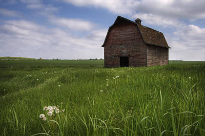 Jul08 Photograph - Old Red Barn And A Field Of Dandelions by Dan Jurak