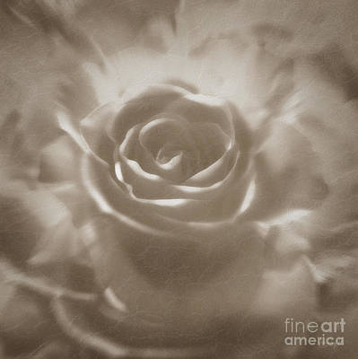 Digital Art - Old Rose by Johnny Hildingsson