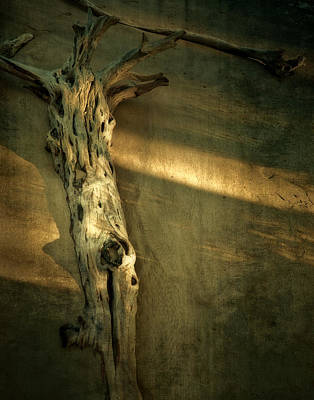 Photograph - Old Tree In Sand by Mario Celzner