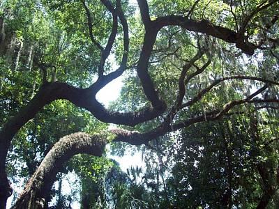 Lisa Williams Photograph - Old Tree by Lisa Williams