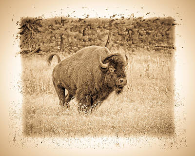 Photograph - Old West Series Buffalo by Steve McKinzie
