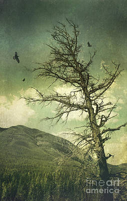 Photograph - Old Withered Tree In The Forest by Sandra Cunningham