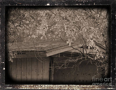 Photograph - Oldshed by Tammy Herrin