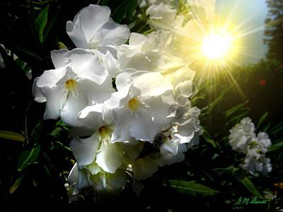 Oleander Sun Art Print by Michael Durst
