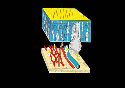 Olfactory Epithelium, Artwork Art Print by Francis Leroy, Biocosmos