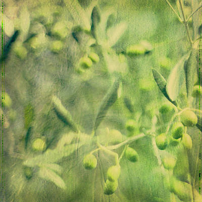 Olive And Leaf Art Print by Linde Townsend