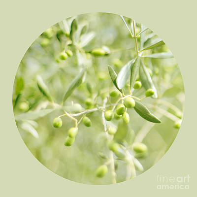 Olive O Art Print by Linde Townsend