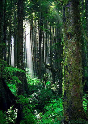 Photograph - Olympic Forest by Ric Soulen