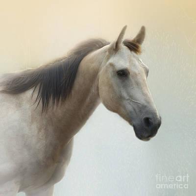 Buckskin Horse Photograph - On A Summer Day by Betty LaRue
