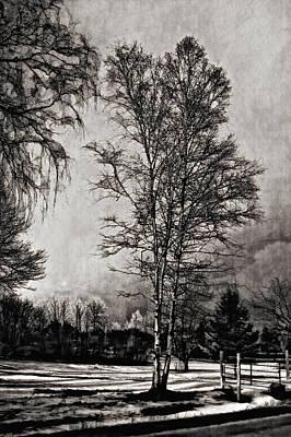 On A Winter's Day Monochrome Art Print by Steve Harrington