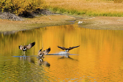 Photograph - On Golden Pond by Steve Stuller