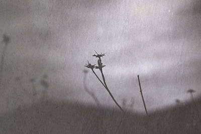 Photograph - On Hold Till Spring by Mark  Ross