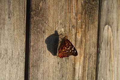 Photograph - On The Fence by Lynnette Johns