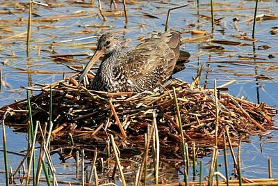 Photograph - On The Nest by Ira Runyan