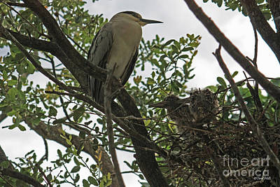 Photograph - On The Nest by Terri Mills