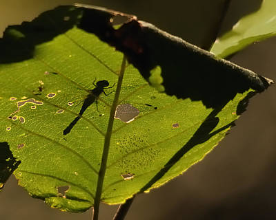 Dragonfly Photograph - On The Other Side by Susan Capuano