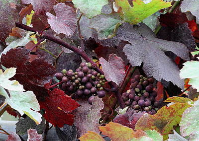 Grape Leaves Photograph - On The Vine by Angie Vogel
