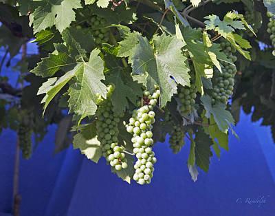 Photograph - On The Vine by Cheri Randolph