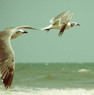 On The Wings Of A Seagull Art Print by Jessica Brawley
