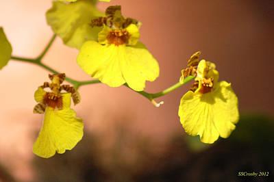 Oncidium Goldiana Orchid Art Print