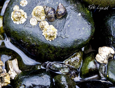 Photograph - One Crab Two Snails by Kate Lynch