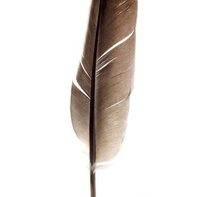 One Feather Art Print by Bernard Jaubert